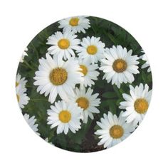 Dazzling Daisy Paper Plate | Support small business