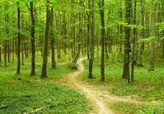 Billedresultat for skov billeder