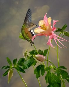 Hummingbird extracting the flower's nectar. Pretty Birds, Love Birds, Beautiful Birds, Animals Beautiful, Wonderful Flowers, Beautiful Pictures, Tier Fotos, Bird Pictures, Colorful Birds