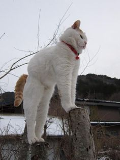 A cat is an example of sophistication minus civilization. --Author Unknown