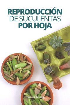 Cactus Y Suculentas, Clay Pots, Backyard Patio, Planting Succulents, Garden Projects, Beautiful Gardens, Mother Nature, Indoor Plants, Terrarium