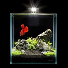 Perfect for keeping non complicated species of plants, shrimp, and small fish species. The Set Includes: Aquarium aGLASS 2.5 gallon tank made of ultra-transpare #TropicalFishAquariumIdeas