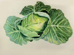 Cabbage, © Peg Nocciolino 2012  acryla gouache