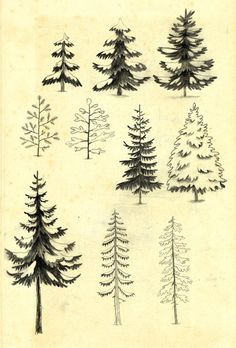 I kinda want to do an embroidery of a Giant pine tree for the house! Chuck Groenink.