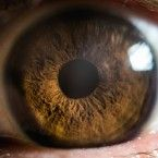 Scientists discover an entirely new human body part… in the eye....blinding me with science.