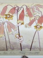 May Gibbs Flora, Australian Art, Flower Fairies, Fairy Land, Christmas Bells, Painting Patterns, Native Plants, Botanical Art, Childrens Books