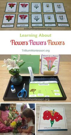 Montessori and preschool activities for learning about flowers during a flowers unit or a plants unit. What Is Montessori, Montessori Science, Montessori Practical Life, Montessori Education, Montessori Classroom, Montessori Toddler, Science Activities, Activities For Kids, Montessori Elementary