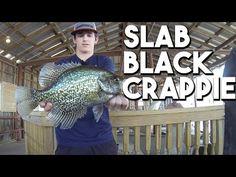 9 Best Reelfoot Crappie images in 2012 | Crappie fishing