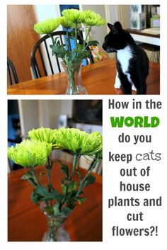 A few different tips and tricks for keeping cats away from precious house plants and flowers. Find out which one works for you!