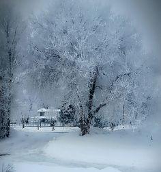 #IDAHOME winter of 2017. My yard is a winter wonderland. Ice and fog.AW