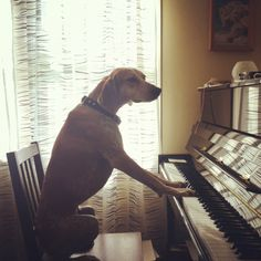 She even plays the piano.
