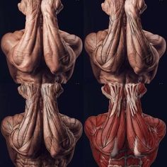 Exceptional Drawing The Human Figure Ideas. Staggering Drawing The Human Figure Ideas. Human Anatomy For Artists, Human Anatomy Drawing, Human Figure Drawing, Body Anatomy, Anatomy Study, Anatomy Reference, Forearm Anatomy, Pose Reference, Anatomy Sculpture