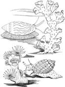 Sea Snails Coloring page