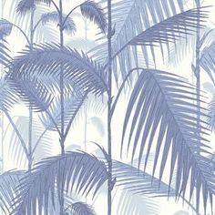 Palm Jungle 95/1005 - Contemporary Restyled - Cole & Son