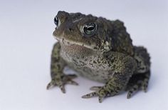 Toad care