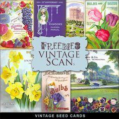 Brindes Kit Cartões de semente do vintage