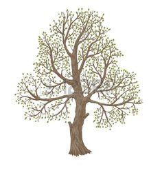 illustration of big old tree