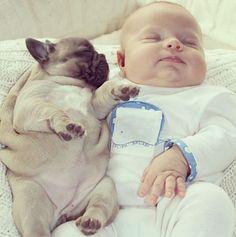 adorable puppies   Cute baby bulldog puppies10 Funny: Cute baby & bulldog puppies