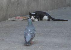 あっちのほうがうまそう、、、  ok...you wanna tango bird...we'll tango.