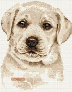 Golden Retriever Face Counted Cross Stitch Kit Ilustrations