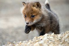 It's hard to believe that this little cutie will grow up to be a hunter~
