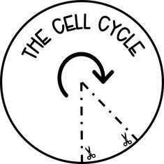 Cell Cycle Activity Free