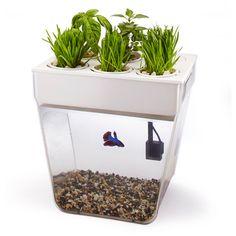 My design inspiration: Water Garden Aquarium on Fab.