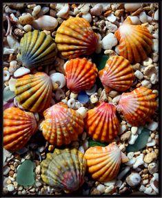Las conchas, especialmente, las que recoje uno, son las más bellas del mundo. Están llenos de recuerdos.