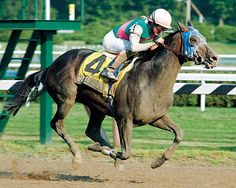 Aptitude, 15 - Grade I Winner. Won the Jockey Club Gold Cup (gr. I) and the Hollywood Gold Cup (gr. I). Finished 2nd in the Kentucky Derby (gr. I) and Belmont Stakes (gr. I). Sired 20 stakes winners, including grade I winner Great Hunter.    Photo: Adam Coglianese