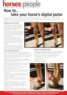 How to... take your horse's digital pulse