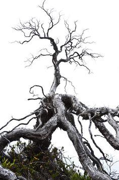 065_3506 Photo Look, Trees, Metal, Nature, Beautiful, Naturaleza, Tree Structure, Metals, Nature Illustration