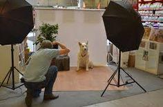 dierenfotograaf