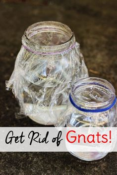 Got gnats in the kitchen? If these pests have invaded your home, use this gnat trap DIY to get rid of them. It's simple, natural and only requires a few items that you probably already have on hand.