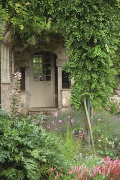 pergola planted with wisteria