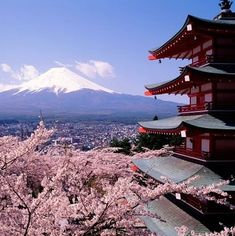 """""""Hanami Festivals"""" -- Most Japanese schools and public buildings have cherry blossom trees outside of them. Hanami festivals celebrate the beauty of the cherry blossom and for many are a chance to relax and enjoy the beautiful view at parks, shrines, and temples with family and friends to hold flower-viewing parties."""