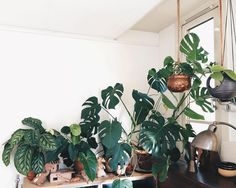 You guys, we're so inspired by your images. They remind us that a simple thing like loving plants connects us across all sorts of boundaries. Thank you for opening up your homes and giving us glimpses of your stories. Keep sharing! Show us how you use plants to color your world! We post a new #interiorrewilding photo each Friday - all you got to do is add the tag.  This photo by @still_______ comes from her jungle-like Amsterdam home. It's so lovely to recognize our favorite plants all ...