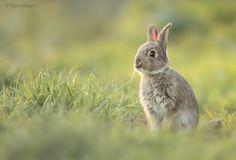 Young rabbit 2 | Flickr - Photo Sharing!