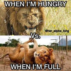 Funny Relatable Memes, Funny Jokes, Funny Lion, Funny Laugh, Brown Bear, Big Cats, Cute Animals, Thoughts, Shower