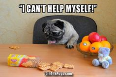 Pug Temptation - Join the Pugs