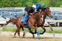 Ziconic on the training track at Belmont. Photo by Kyle Acebo                                              Zenyatta's sons training together.