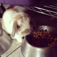 Rabbits eat dog food?!?