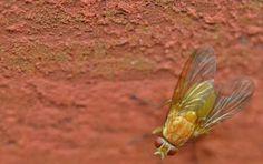 Come allontanare i moscerini da casa - Come allontanare i moscerini da casa?…
