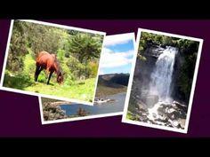 Reel Ani Silva Videos, Polaroid Film