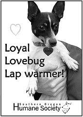 Loyal, you bettcha  www.sohumane.org