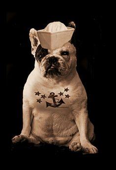 Sailor Dog. THE cuteness!