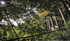 https://flic.kr/p/HamaXf | INHOTIM . May 2016  12 | Inhotim, Museo y parque ecologico natural. Brumadinho, Minas Gerais. Fotografia: Artexpreso . Rodriguez Udias . *Photochrome Artwork Edition / BH, Brasil . May 2016 .. Website: rodudias.wix.com/artexpreso #Inhotim #artexpreso #photochrome #minasgerais #soubh