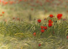 La naturaleza es... color by Jabi Artaraz, via 500px