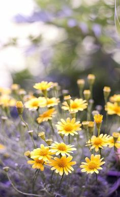 tiny daisy.. (by mellow_stuff on Flickr)