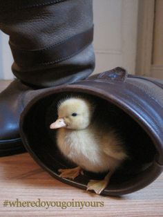 Quacky Easter from Dubarry of Ireland Dubarry Boots, Poultry Breeds, Backyard Birds, Country Outfits, Cute Pictures, Life Is Good, Puppies, Canoeing, Ducks