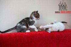Rukola i rabarbar are looking for a home ... #cute #cutecats #cats #caturday #kot #koty #neko #gato #katz #katzen #kittens #chat